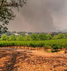 Photo: Napa Valley vineyards engulfed by wildfire during extreme heat and severe drought.(Source: Yale Climate Connections)
