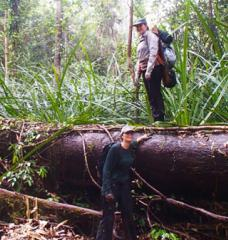 Two MIT students stand by a fallen tree in a dense green peatland forest