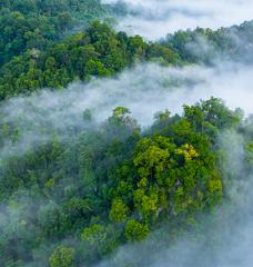 Morning mist in the Amazon rain forest