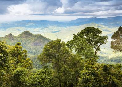the Gondwana Rainforest of Queensland, Australia